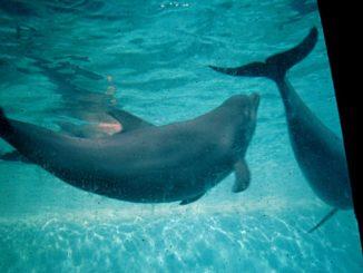 Le zoo aquarium de Madrid dauphin
